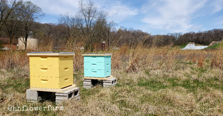 My First Week as a Beekeeper