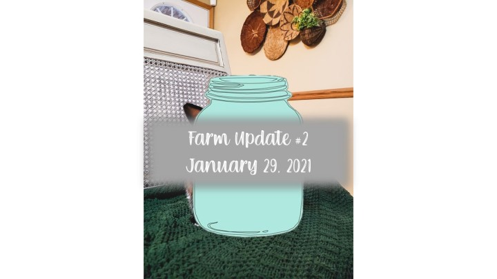 Farm Update #2: January 29, 2021