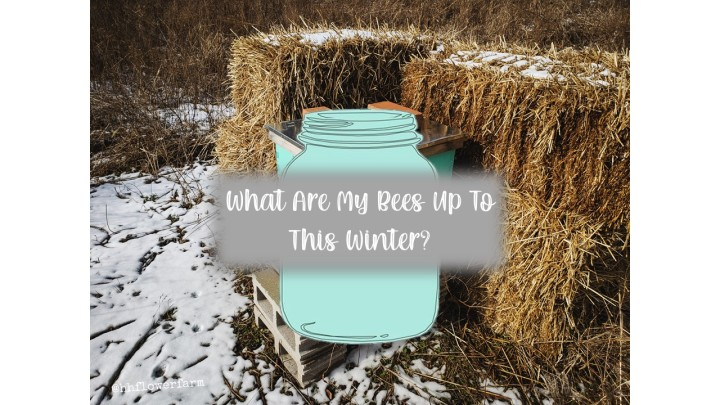 What Are My Bees Up To This Winter?